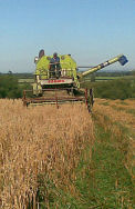 Alan harvesting the crop of oats