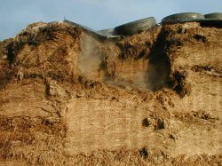 cross section of silage clamp
