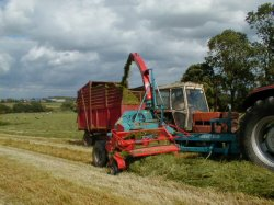 Cutting the grass for silage